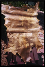 Raw Elk Hide